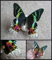 Sunset Moth by CabinetCuriosities