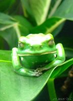 frog by ninas-photography