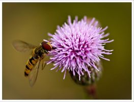 a hoverfly again by neoloonatic