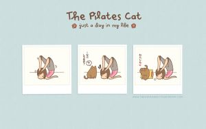 The Pilates Cat Wallpaper by PeterPan-Syndrome