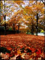 Red Leaves by FargoLevy