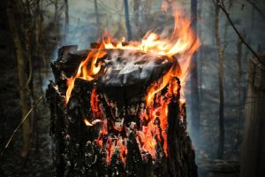 Log of Fire by Mitchography