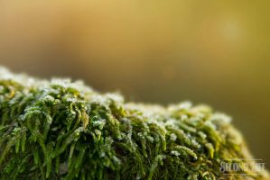 Frozen moss by DillonStein