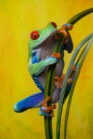 Sunny frog by AngiWallace