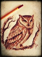 perched owl by utakaice