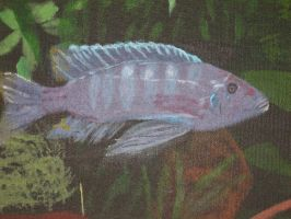 African Cichlid by PlayerBill