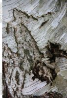 Tree Bark 118_quaddles by quaddles