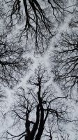 Clandeboye Canopy1... by dhc72
