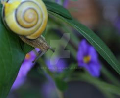 Snail away  dream your dream 2 by Sr-Manolo
