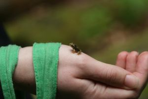 Tiny Frog by Indiliel