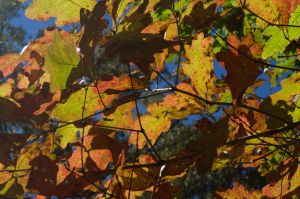 2014-10-22 Colors of the Day 27 by skydancer-stock