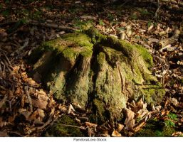 Tree Stump 26 by AnitaJoy-Stock