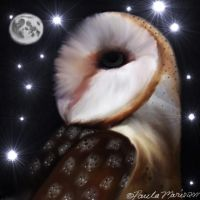 Barn Owl In The Moonlight by youlittlemonkey