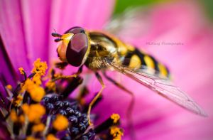 Hover Fly by BlueBlur7000