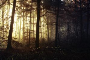 Morning Mists in the Woods 1 by Jantiff-Stocks
