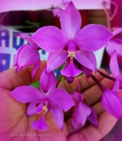 Orchid by Litratobyberneserose