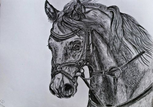 Horse by PascalleDrawings