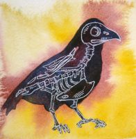 Crow by luthien-9