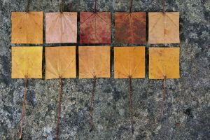 Geometric Autumn VIII by myp55