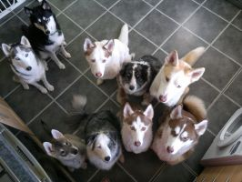All of our dogs by Ezekiel-J