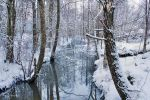 Winter Stream by Pajunen