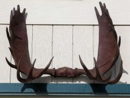 AthenaStock: Antlers Front by AthenaStock