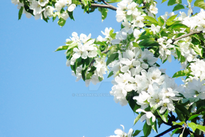 Some flowers in a tree by saksaken