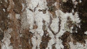 Texture 6 - Bark by Allyx-Stock