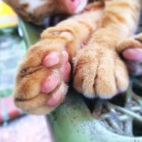 Ginger Feet by Eonity