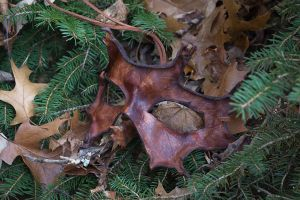 Brown Oak Leaf Leather Mask by OsborneArts
