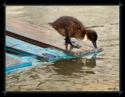 Narcissist Duckling by penelopew