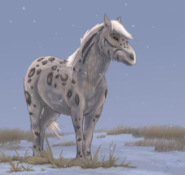 snow leopard horse by DawnFrost