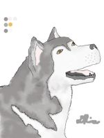 Malamute-colored by K9girl06