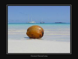 Coconut by garnoul