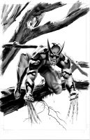 Wolverine Vampire Variant BW by mikemayhew