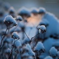 Touch Of Winter VII by JoannaRzeznikowska
