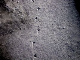 Bird tracks in the snow by Tragic-Ashes