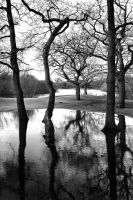 Hollow Ponds: reflections1 by Coigach