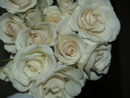 ivory roses by Irie-Stock