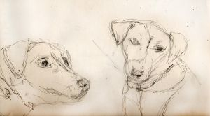 Dog sketches by arteclair