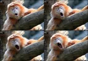 Monkey Yawn by mydigitalmind
