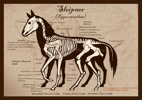 Sleipnir Skeleton by Xenothere