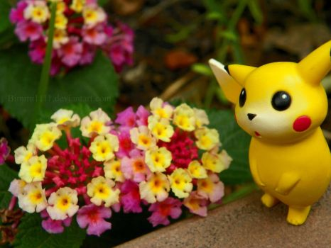 Take time to smell the flowers, Pikachu! by Bimmi1111
