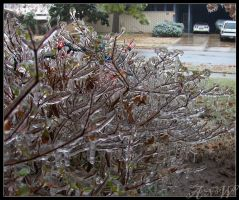 Ice Storm: December 2007 by Leonca
