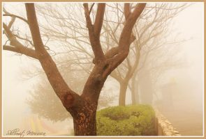 On a foggy day 3 by ShlomitMessica