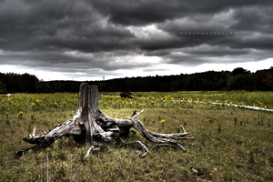 +Knotted Limbs: HDR+ by MeganAllen