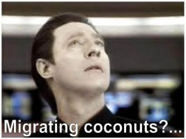 Coconuts by Data-Fans