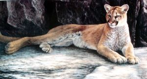 young cougar by traits