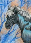 ACEO: Old Soul by Agaave