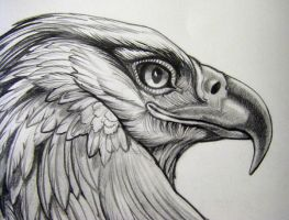 Eagle Pencil Rendering Closeup by HouseofChabrier